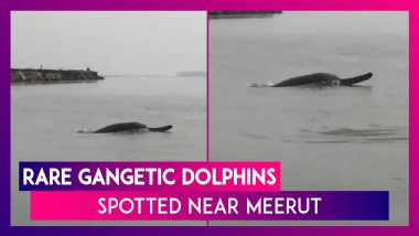 River Ganga Near Meerut Sees The Return Of Gangetic Dolphins, Rare Sight Caught On Camera