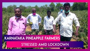 India Under Lockdown: Karnataka Pineapple Farmers Face Trouble In Getting Produce To Market
