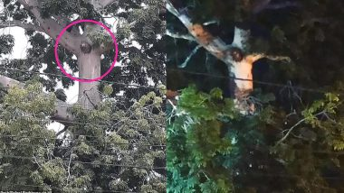 Image of Jesus Christ Crucifixion Appears on a Tree Making Colombians Gather Around It Breaking the Coronavirus Lockdown (Watch Video)