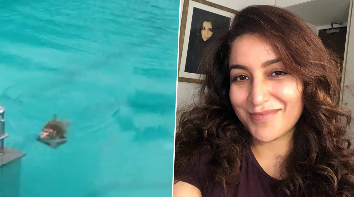 Tisca Chopra Shares Video of Monkeys Having a Pool Party While Humans Quarantine in Their Homes