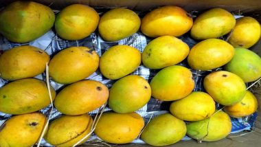 Mango Growers Hit For Second Consecutive Year by COVID-19 Curfew