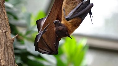 Scientists Find Three New Viruses in Bats in Laos Similar to SARS-CoV-2