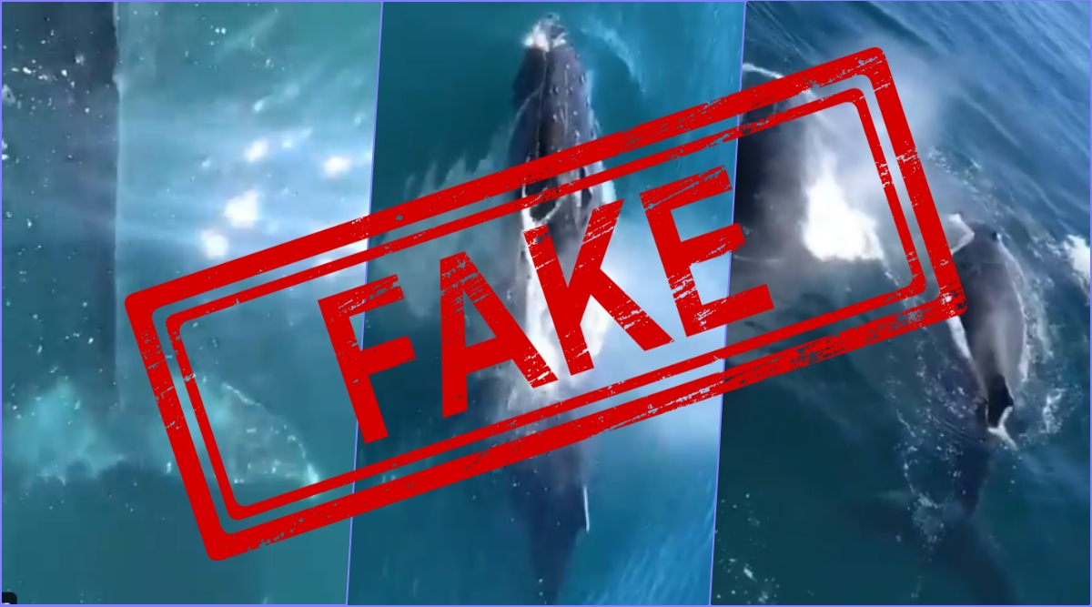 Viral Video of Humpback Whales Swimming at Bombay High is FAKE, Here's Truth Behind Old Video From Indonesia Taking Internet By Storm