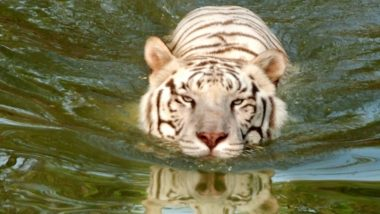 Hyderabad's Nehru Zoological Park Re-Opens After Nearly Seven Months
