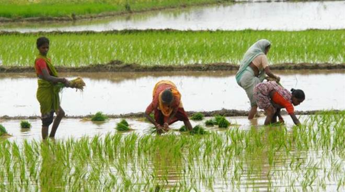 MHA's New Circular Exempts Agricultural Sector From Coronavirus Lockdown Orders, Asks Farm Workers to Strictly Adhere to Social Distancing Norms