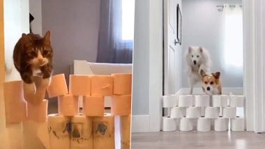 Level Up Challenge With Cats and Dogs Jumping Over Walls Made of Toilet Paper Rolls Has Netizens Questioning People About Hoarding Excessive Toilet Papers