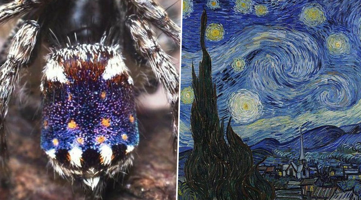 New Species of Peacock Spiders Resembling Vincent van Gogh's Masterpiece 'Starry Night' Discovered in Australia (Watch Video)