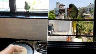 Not Chilly but Chapati! Video of a Parrot Waiting at Kitchen Window for Roti to Be Made to Get a Piece During Coronavirus Lockdown Goes Viral