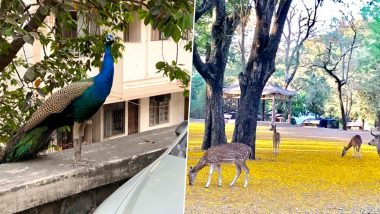 Peacocks, Deer And Dolphins Spotted in Mumbai! Animals Seen Roaming Freely As Humans Remain in Lockdown (See Pictures & Videos)