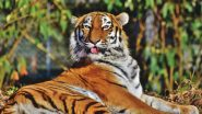 Tiger View in Google 3D Animals Is Boring? Download These HD Photos and Mobile Screensavers of Fierce Tigers Instead!