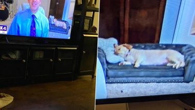 Photo of Weather Reporter's Dog Sleeping On Customised Couch With Bone-Shaped Pillow Goes Viral