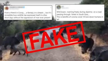 Fact Check: Video of Wild Boars or Pigs Invading Streets of Coorg or Goa or Kolhapur is Not Effect of Lockdown, Know Truth About The Viral Clip