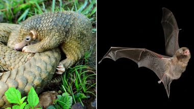 Don't Hate Bats and Pangolins During This Pandemic! Here's Why We Should Know the Importance of These Animals