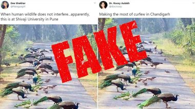 Fact Check: Picture of Peacocks and Parrots Gathered Together is From Lockdown in Chandigarh, BHU or Coimbatore? Know Truth About The Viral Image