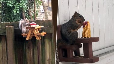People in Quarantine Make Picnic Tables for Squirrels As Pastime and the Results Are Adorable! (View Pics)