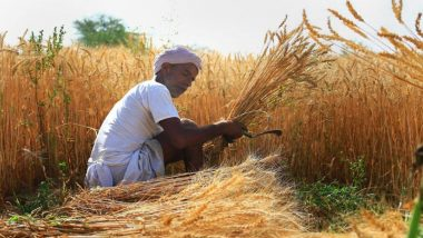 Agriculture Thrives Despite COVID-19 Lockdown, 67% Wheat Sown in Winter Harvested, Sowing of Summer Crops Up by 14%