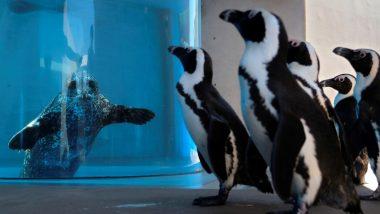 Yokohama Hakkeijima Sea Paradise, Japanese Aquarium Introduces Sea Animals to Each Other And Share Results Online to Entertain Public Amid Lockdown (Watch Video)