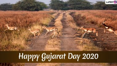 Happy Gujarat Day 2020 HD Images and Wishes: Send Gujarat Sthapana Divas WhatsApp Stickers, Facebook Messages, GIF Greetings and Wallpapers on May 1