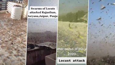Terrifying Locust Attack TikTok Videos from Rajasthan, Madhya Pradesh, Punjab, Haryana and Maharashtra Go Viral! Watch Hair-Raising Tiddi Dal Clips That Look Straight Out of Horror Movies