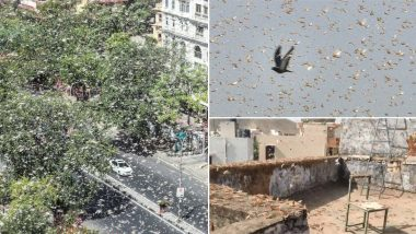 Locust Swarm Attacks North India: Scary Pics and Videos of 'Tiddi Dal' From Rajasthan, Madhya Pradesh and Uttar Pradesh Worry Farmers