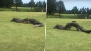Alligators Engage in Fierce Battle at South Carolina Golf Course For Two Hours as Golfers Watch on, Scary Video Goes Viral