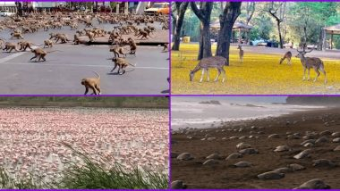 Animals Reclaiming The Earth: 13 Instances of Animals and Birds Roaming Freely During Coronavirus Lockdown From Around The World (Watch Viral Pics And Videos)
