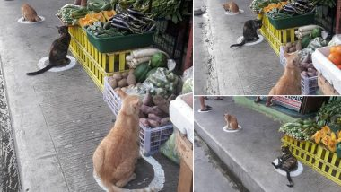 Stray Cats in Manila Follow Social Distancing 'Purr-fectly!' Pics of Felines Sitting in Marked Circles Meant For Humans Go Viral