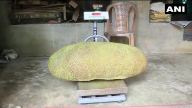 Wayanad's Giant Jackfruit Eyeing Entry into Guinness World Records