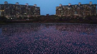 Deep Pink Water Spotted in Middle of Navi Mumbai's Talawe Wetland, Likely Cause of Rare Algal Bloom (View Pic)