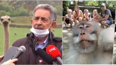 Ostrich Photobombs Spanish Politician's Live Broadcast; Funny Viral Instances of Animals and Birds' Interference That Made the Internet Laugh (Pics & Videos)