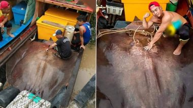 Giant 280-Kg Stingray Caught by Fishermen in Malaysian River, View Pics of The Rare Monstrous-looking Sea Creature