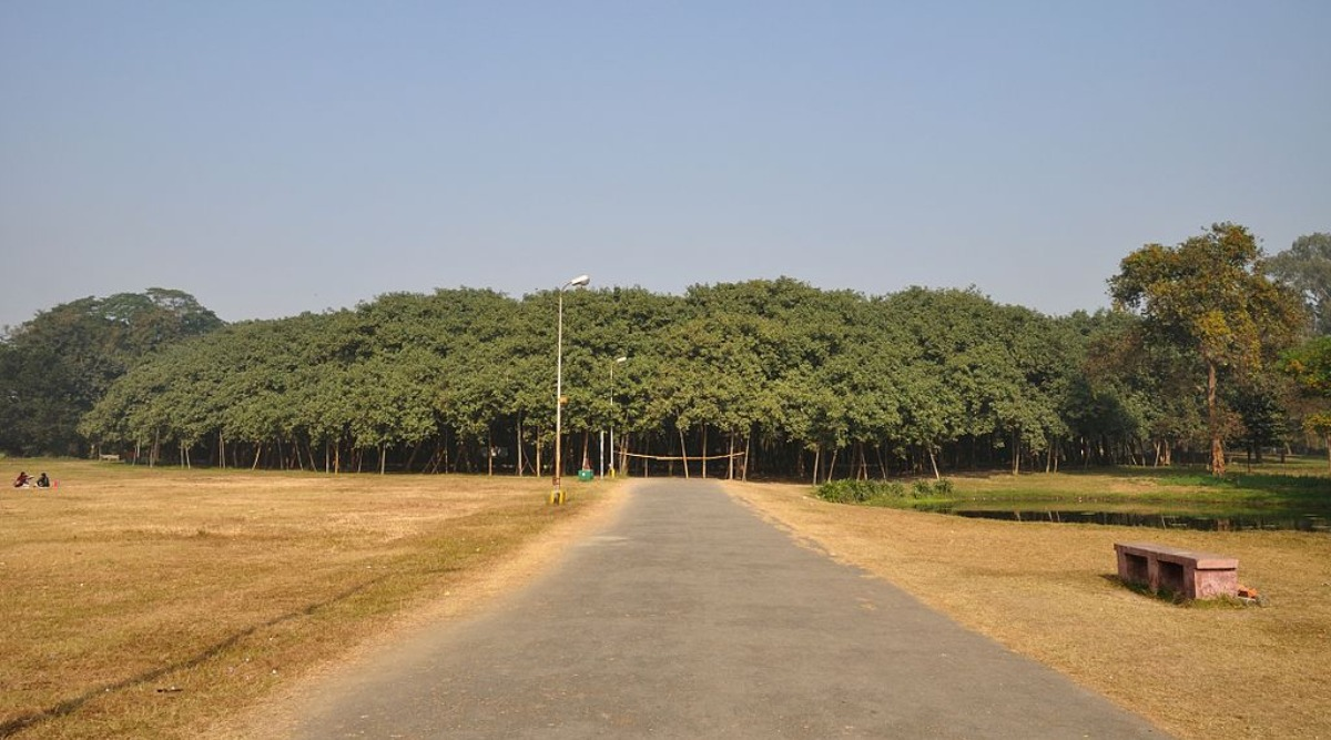 Cyclone Amphan Damages 270-year-old Great Banyan Tree in Kolkata's Botanic Garden (Watch Video)