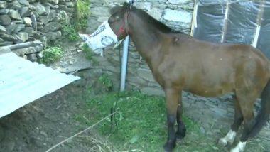 J&K: Horse Under Home Quarantine in Rajouri, Owner's Coronavirus Test Report Awaited