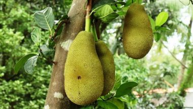 Jackfruit Falls on Man's Head in Kerala Causing Freak Injury, Hospital Finds Him Positive For COVID-19