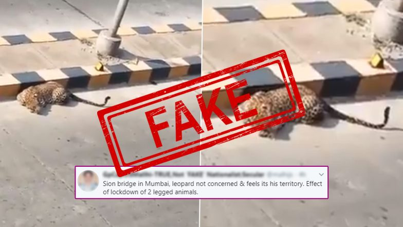 Fact Check: Leopard Spotted Near Sion Bridge or JVLR in Mumbai? Know Truth About This Viral Video Shared by Raveena Tandon