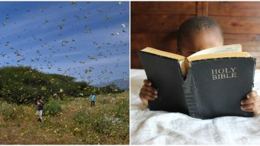 End of The World is Here? Bible Verses on 'Locusts and Plagues' Spark Fear of Nearing Apocalypse Among Social Media Users