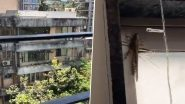 Locusts Seen in Mumbai? Netizens Wonder as Pics and Videos of Tiddi Dal Shared Online Claiming to Be From Vikhroli, Juhu and Other Areas in The City (Check Tweets)