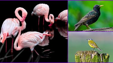 World Migratory Bird Day 2020: Six Beautiful Birds That Visit India During Migration Every Year