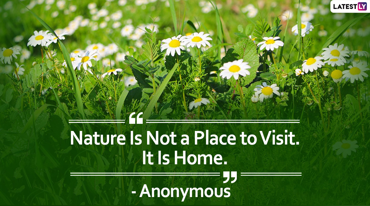 Greenery Day 2020 Hd Images With Quotes Instagram Caption Worthy Nature Sayings And Beautiful Images That You Can Share On This Observance Latestly