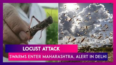 Locust Swarms Enter Maharashtra, Delhi On Alert While UP Govt Deals With Tiddi Dal Attack In Jhansi