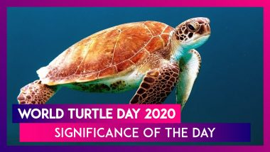 World Turtle Day 2020: Significance of The Day That Raises Awareness About Protecting Turtles