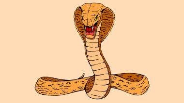 Bathing Cobra to Rat Chasing Away a Serpent, Interesting Snake Videos That Went Viral This Week