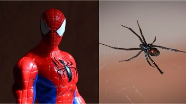 Three Brothers Provoke Black Widow Spider to Bite Them Hoping They Will Turn Into Spider-Men in Chayanta, Hospitalised