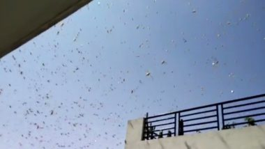 Locusts Not Sighted in Mumbai: BMC Terms Pictures And Videos of Tiddi Dal Shared Online Fake, Says Locust Attack Unlikely Due to Monsoon Winds