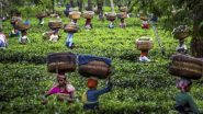 West Bengal Govt Allows Deployment of 100% Workforce in Tea Gardens from June 1