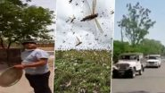 Locust Attack in India: From Banging Utensils, Beating Drums, Using Police Siren & Playing DJ, People Resort to Innovative Ways to Scare And Fight Tiddi Dal Invasion