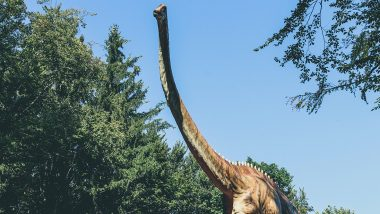 Sauropod Dinosaurs' 100 Million-Year-Old Bones Discovered in Meghalaya