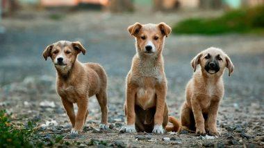 Pet Food Sales Soar 20% in 2020 as Pet Adoption Increased During Lockdown