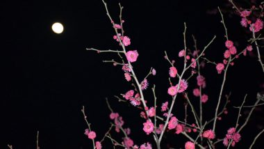 Super Flower Moon 2020 Date and Time: How and When to See the Fourth and Final Supermoon of This Year