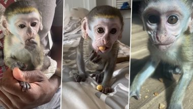 Mojo, The Monkey is the Latest TikTok Sensation, Adorable Videos Document The Baby Primate Growing up with His Pet Parents